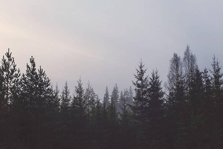 2018年,黑暗森林已经降临!创业公司陷入死亡周期